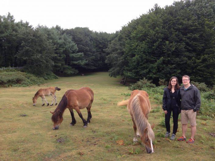 wild horses in san sebastian